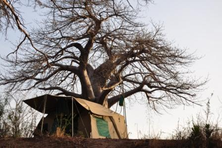 Camping Safaris - Ruaha Camp